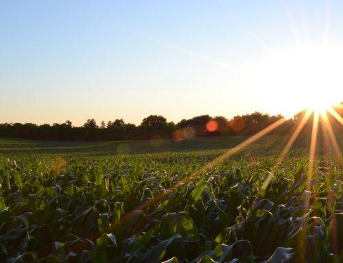 Indikativni godišnji plan objave natječaja ruralnog razvoja