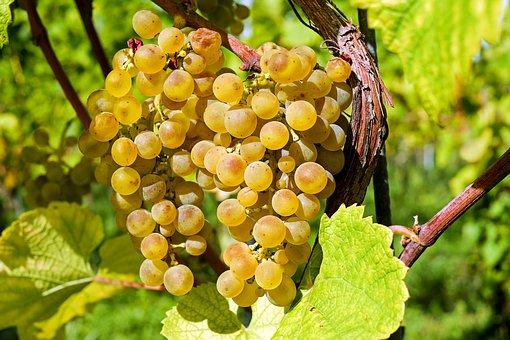grapes-2715711__340