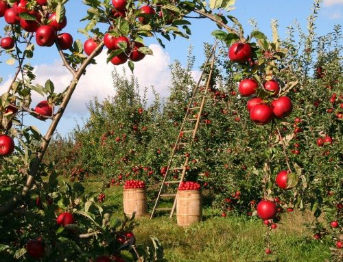 Grad Samobor potiče poljoprivredu i ruralni razvoj